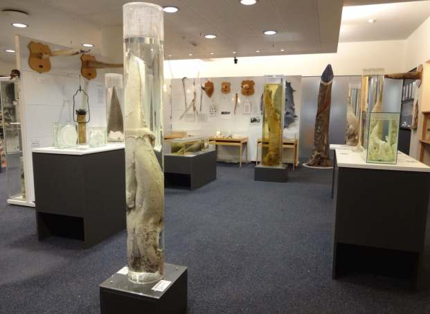 Icelandic-Phallological-Museum-museum-room-with-whale-penis-display.jpg
